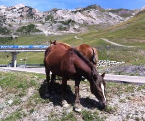 bonaigua-caballos