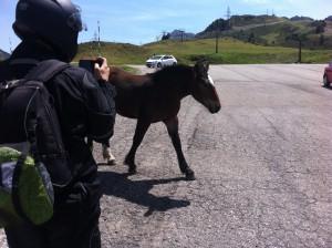 puertobonaigua-caballos